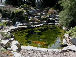 Koi Pond Photo