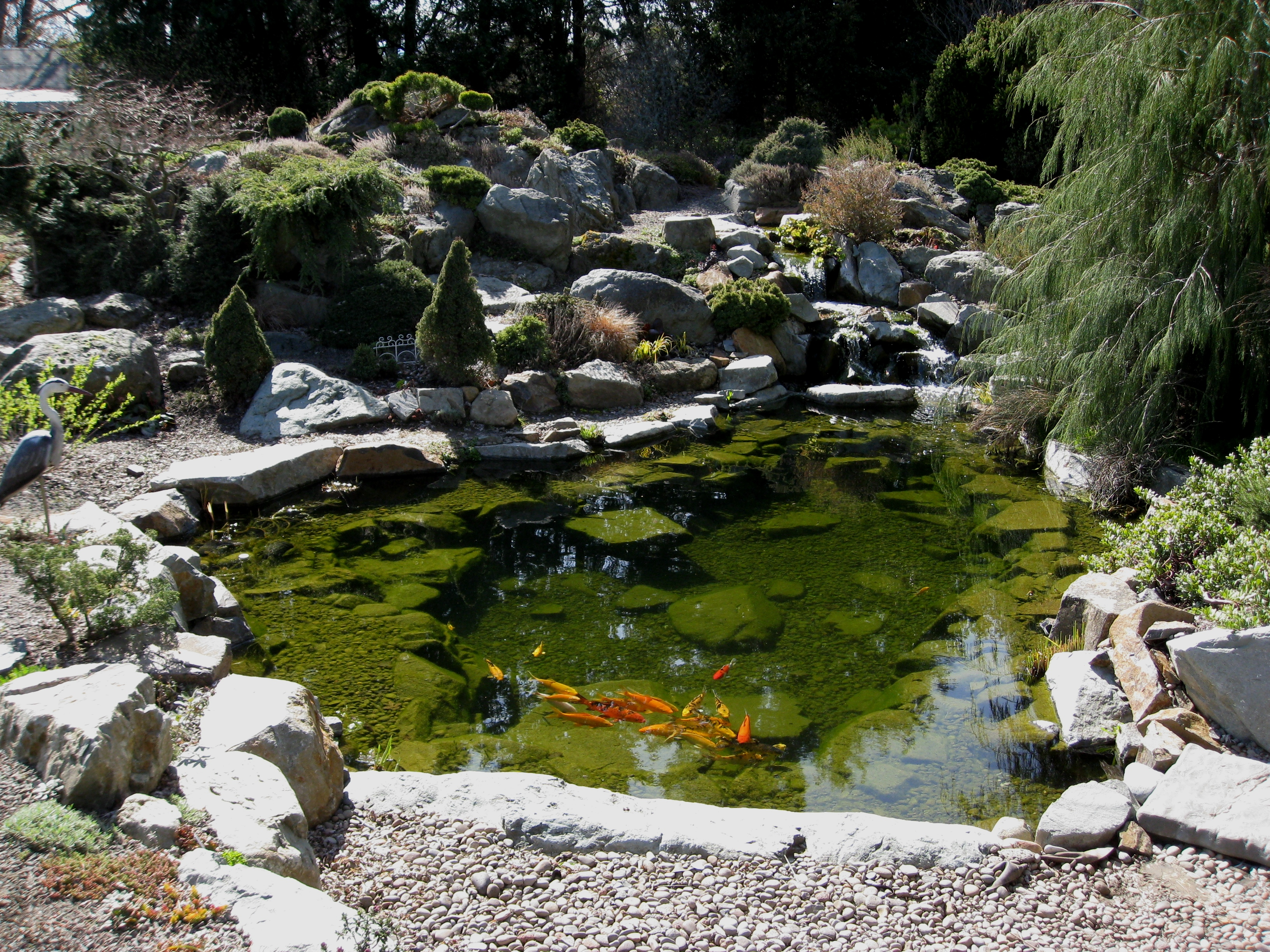 Seasonal pond maintenance neb info for Backyard pond maintenance